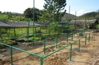 MBP's Tree Nurseries