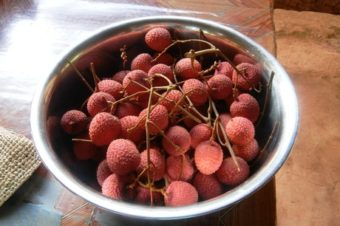 Litchi Season is Here