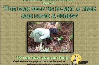 International Forestry Day- March 21, 2013