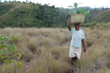 Reforestation Efforts in Kianjavato, Madagascar