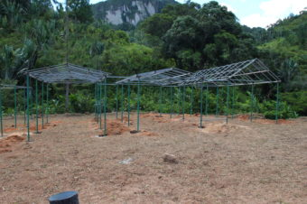 Nursery Updates from Madagascar