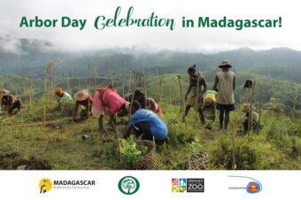 Happy Arbor Day from Madagascar!