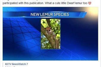 New Lemur Species Discovered!