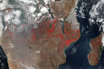 The Harsh Reality of Forest Fires in Madagascar
